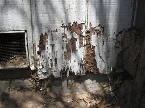 Dégâts occasionnés aux termites