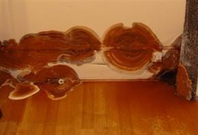 La merule se développe aussi dans les cloisons