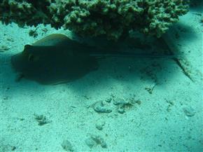 Le CNT - Plongée sous-marine à La Turballe